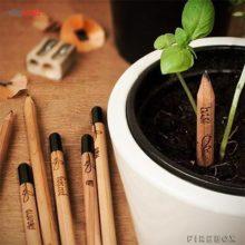 مداد چوبی قابل کاشت اسپراوت Green Pencil
